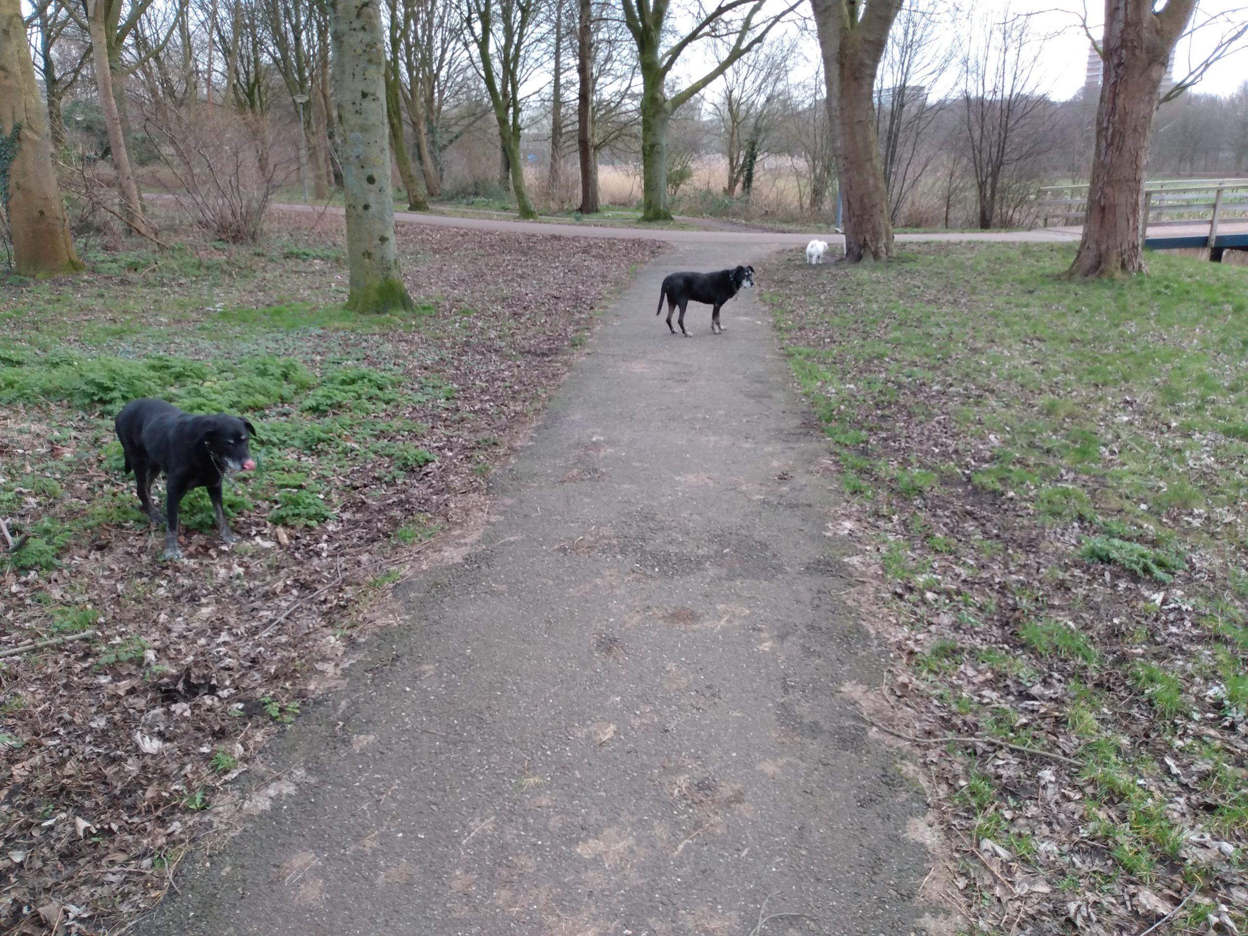 Uitgestrekte groene omgeving, waar honden los kunnen lopen (Rotterdam Ommoord, nabij de Rotte en Ommoordseveld)